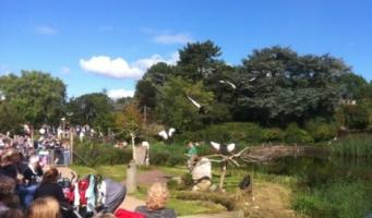 Avifauna: een attractie waar Alphen trots op kan zijn