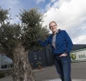RM Plants: palm en olijfboom doen het prima in Nederlands klimaat