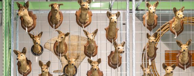 Nieuwe Naturalis is open!