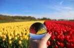 Winnaars Fotowedstrijd Bloemencorso Bollenstreek